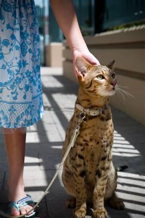 ashera-cat.jpg