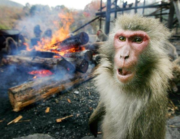mean-looking-monkey.jpg